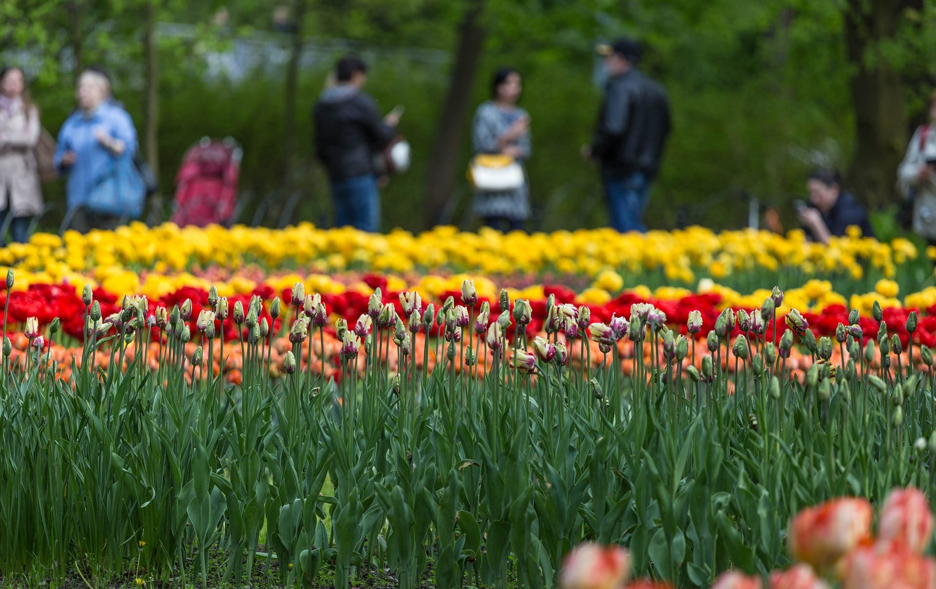 People standing around admiring the flowers in St Stephen's Green Park.
