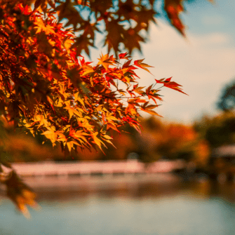 Autumn shopping package